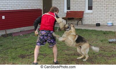 chien, sien, attaque, propriétaire, formation