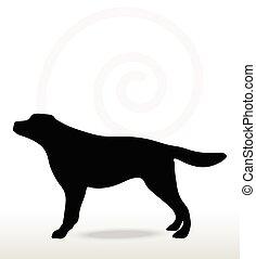 chien, silhouette