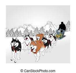 chien sledding