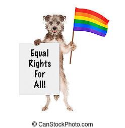 chien, soutenir, droits gais, à, lgbt, arc-en-ciel, drapeau