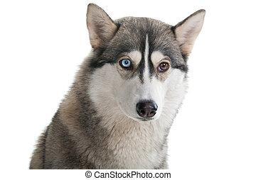 chien, sur, a, blanc, arrière-plan.