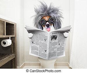 chien, toilette, siège, journal lecture
