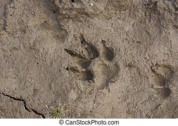 chien, trace