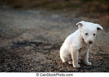 chien, triste