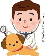 chien, vétérinaire, jeune