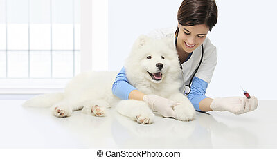 chien, vétérinaire, vétérinaire, vétérinaire, clinique, examen, sanguine, seringue, table, sourire, essai