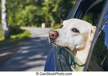 chien, voyage, voiture