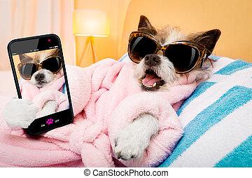 chien, wellness, selfie, salon, spa