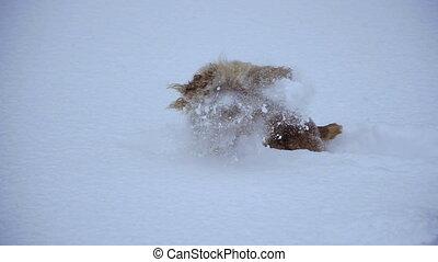 chien, winter., tout, neige