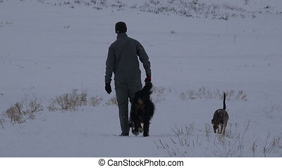 chiens, 2, hiver, homme, promenade