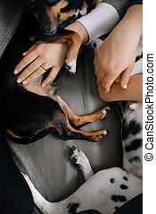 chiens, bras, propriétaires, mensonge