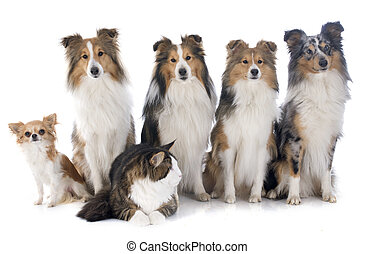 chiens, chat
