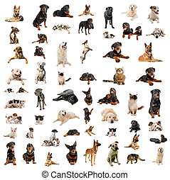 chiens, chiots, et, chats