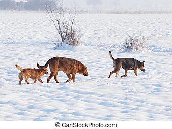 chiens, hiver, errant, temps