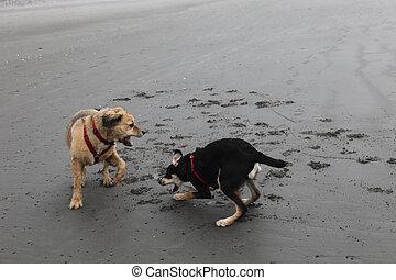 chiens, jouer, deux