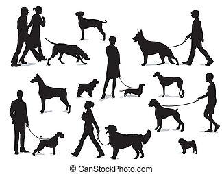 chiens marche