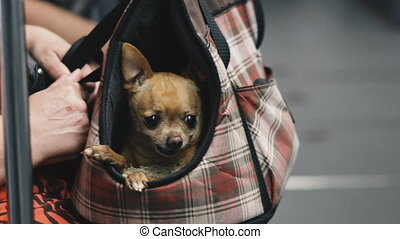chiens, transport., transport, sac