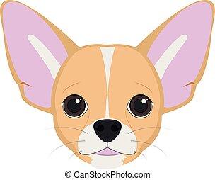 chihuahua , σκύλοs , εικόνα , απομονωμένος , μικροβιοφορέας , φόντο , άσπρο