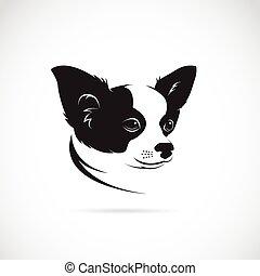 chihuahua, イメージ, 犬, ベクトル, 背景, 白
