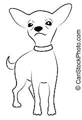 chihuahua, 代表, かわいい