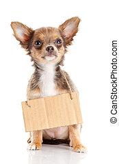 Chihuahua, 保有物,  puppie, 犬, ボール紙, ホームレスである, 空