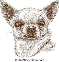 chihuahua, 彫版