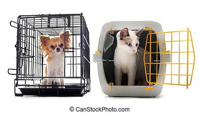 chihuahua and cat closed inside pet carrier isolated on white background