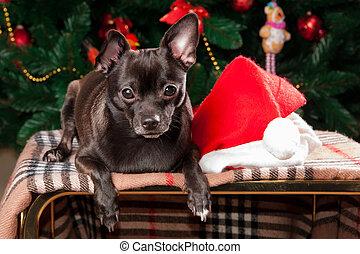 chihuahua, auf, der, hintergrund, von, weihnachtsbaum