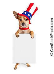 chihuahua, chien, signe, américain, tenue, patriotique