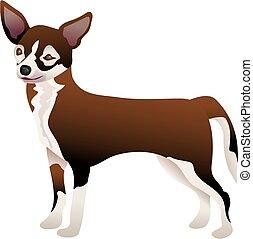 Chihuahua - chihuahua illustration