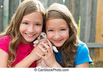 chihuahua, chouchou, chien, jumeau, soeurs, chiot, jouer