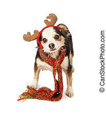 Chihuahua Cross Dog With Reindeer Antlers