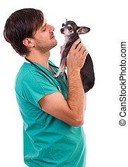 chihuahua, dierenarts, dog, vasthouden, arts