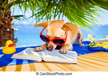 dog reading - chihuahua dog reading a book and relaxing...