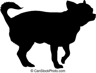 Chihuahua dog silhouette on a white background