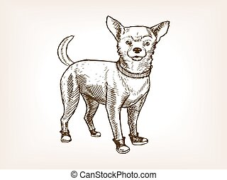 Chihuahua dog sketch vector illustration