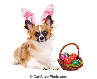 Chihuahua dog wearing bunny ears with easter basket