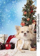Chihuahua dog with christmas tree