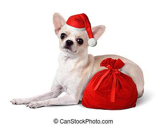 Dog with santa hat and gift bag, Christmas concept