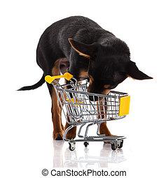 Chihuahua dog with shopping cart