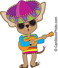 chihuahua, guitare