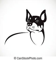 chihuahua, immagine, cane, fondo., vettore, bianco, tuo, design.