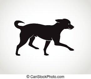 chihuahua, immagine, cane, fondo., vettore, cuccioli, bianco