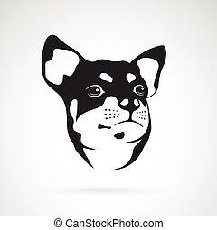 chihuahua, immagine, cane, vettore, fondo, bianco