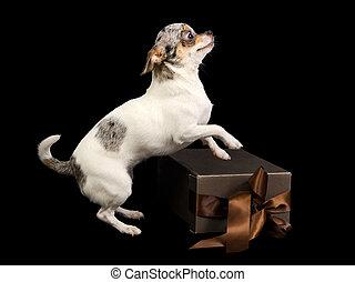 Chihuahua present