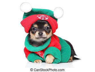 Chihuahua puppy in Santa costume