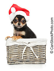 Chihuahua puppy in Santa red hat