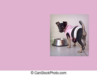 Chihuahua Puppy Pink