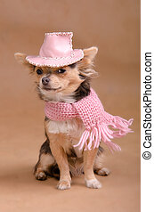 Chihuahua puppy with pink hat and scarf