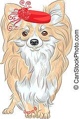 chihuahua, raça, cão, vetorial, sorrindo, moda